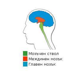 Учете се не да не мислите, а да мислите правилно.
