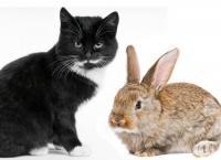 Предлагам уроци за лов на мишки срещу мизерно заплащане - а досега нито един заек не се е записал.