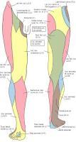 Инервазия на кожните зони на краката