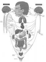 Упражнения за нервната система